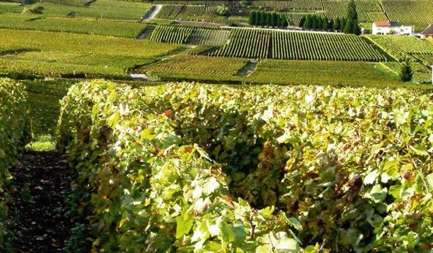 The Champagne Slopes, Houses and Cellars on UNESCO's World Heritage List! Champagne Pol Roger